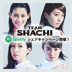 TEAM SHACHI×Spotifyシェアキャンペーンの告知ビジュアル。