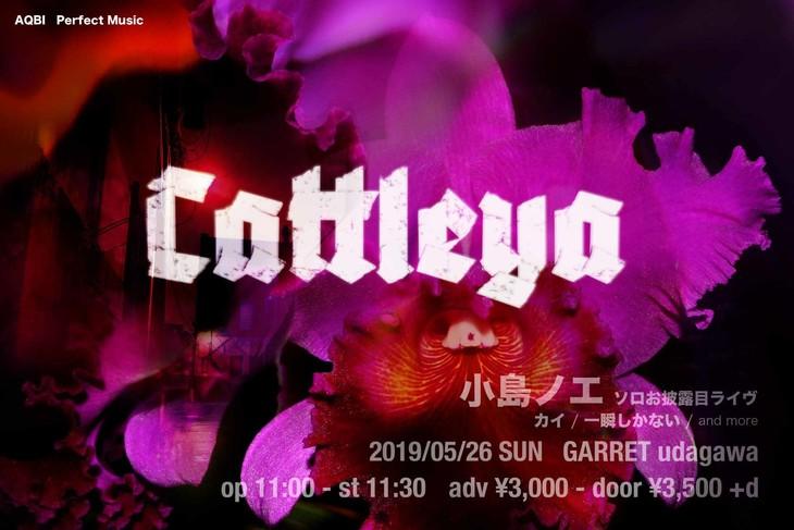 小島ノエ・ソロお披露目「Cattleya」告知ビジュアル
