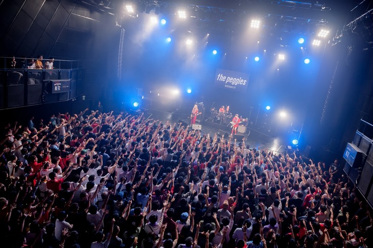 「the peggies tour 2019 Hell like Heaven trip」東京・マイナビBLITZ赤坂公演の様子。(Photo by Jumpei Yamada)