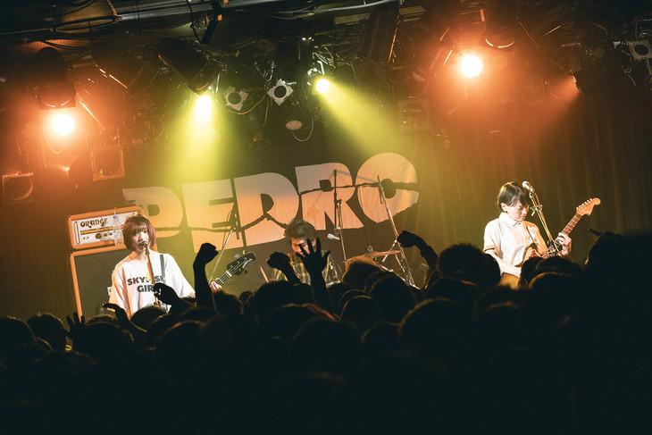 PEDRO(Photo by kenta sotobayashi)