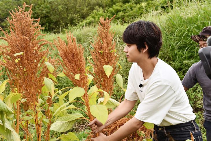 アマランサスの畑を訪れた北村匠海(DISH//)。(c)日本テレビ