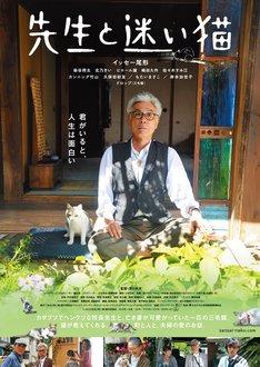 映画「先生と迷い猫」ポスタービジュアル (c)2015「先生と迷い猫」製作委員会