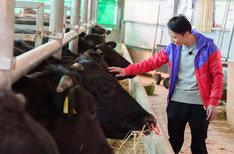 牛と触れ合うカミナリ石田。(c)日本テレビ