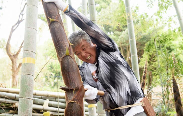 メンマ作りを手伝う村上ショージ。(c)日本テレビ