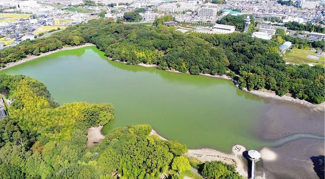 水抜き前の山田池。(c)テレビ東京