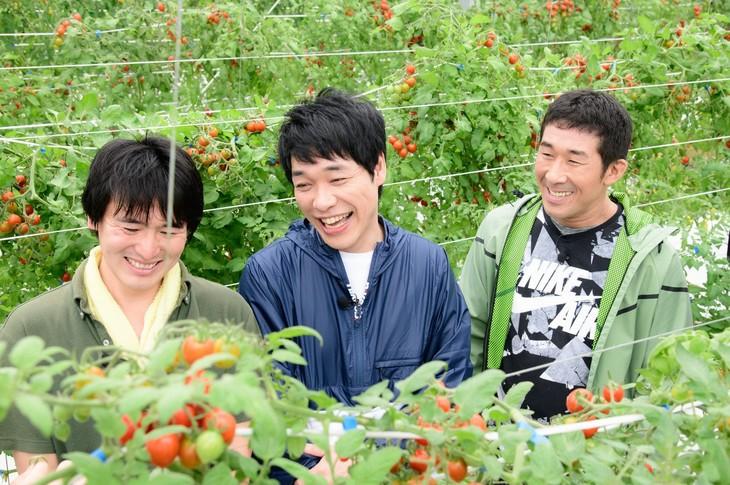 """""""トマト名人""""(左)と共にトマトを収穫する麒麟(右)。(c)日本テレビ"""