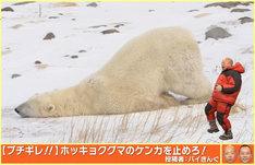 ホッキョクグマにツッコミを入れるバイきんぐ小峠。(c)NHK