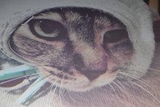 スクリーンに映し出された、佐藤健の愛猫ぷちろーの写真。