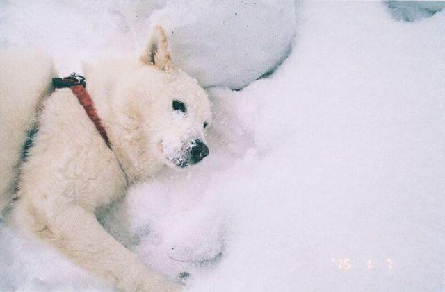 写真集「白い犬」刊行記念 梅佳代トーク&スライドイベントのビジュアル。(撮影:梅佳代)