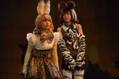 舞台「けものフレンズ」ゲネプロより。左から尾崎由香演じるサーバル、野本ほたる演じるオカピ。