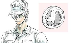 白血球(好中球)