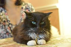 さいとうちほの飼い猫・チュチュ太郎