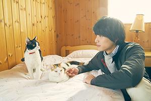 「旅猫リポート」より、左からナナ、モモ、福士蒼汰演じる宮脇悟。