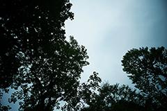 公園でフィルターを使用して撮影した写真。