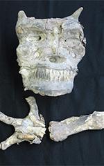 村田町の商家の蔵から発見された鬼の頭と腕のミイラ。村田町歴史みらい館に収蔵されている。(写真提供:村田町)