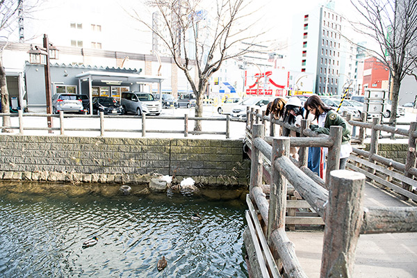 冷たい川を泳ぐカモを眺める神宿。