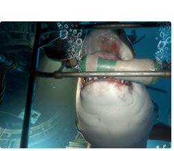 「PlayStation VR WORLDS」に収録されている「Ocean Descent(オーシャン ディセント)」。